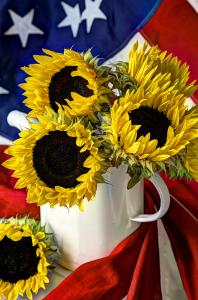 All American Sunflowers By Sarah Schroder Wins Best Of Show